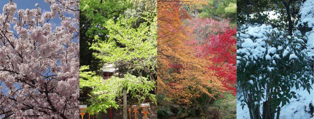 左から順に桜の花、新緑、紅葉、雪の積もる木々の風景