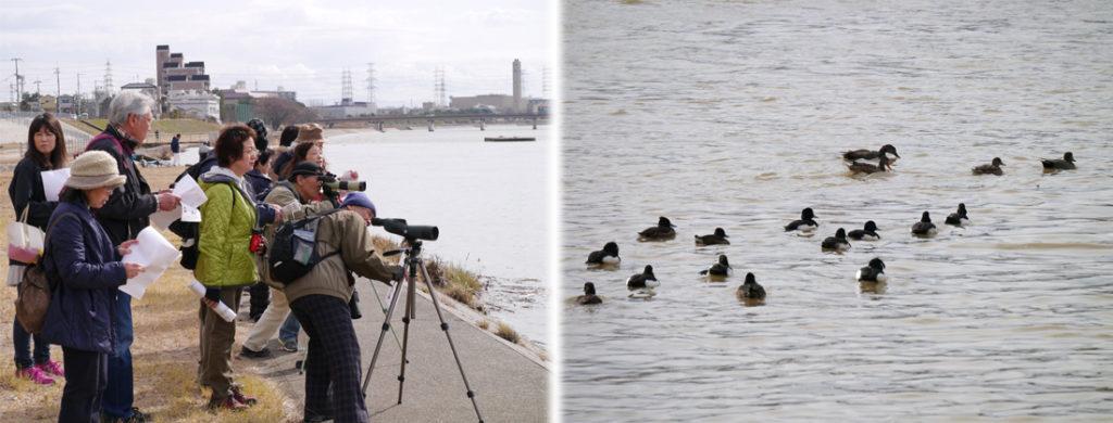 左側では野鳥観察会に集まった十数人ほどの皆さんが望遠レンズを覗いたり資料を見ている。右側には川面に17羽ほどの野鳥が浮かんでいる。