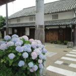 小浜宿の紫陽花と古い建物