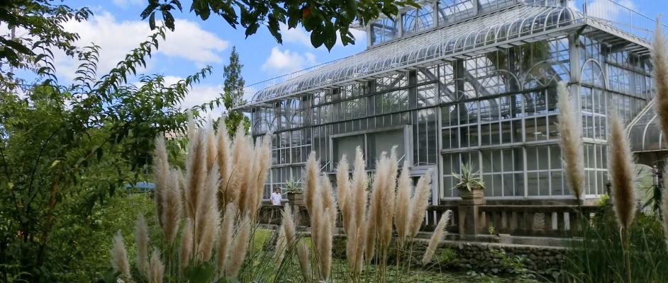 画像:旧ガーデンフィールズにあったガラス張りの建物とススキなどの植物