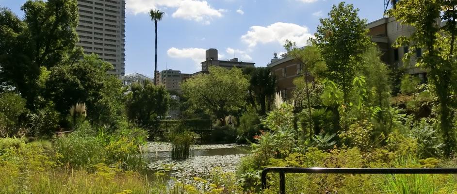 旧ガーデンフィールズの中心部の池と周辺に植物がよく茂っている風景