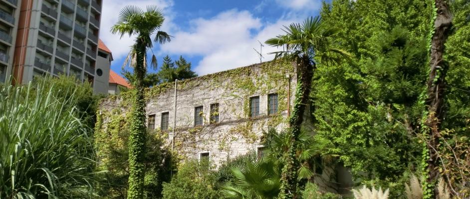 旧ガーデンフィールズから見る蔦の這った雰囲気のある建物とマンションが南国風の植物と一緒に写っている風景