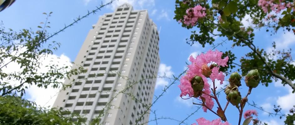 旧ガーデンフィールズから見上げるマンションとピンク色の花の風景