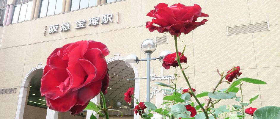 宝塚駅前に植えられたベルサイユのばらをモチーフにした赤い薔薇と背景に阪急宝塚駅のロゴが見えている