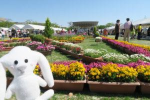 ステージ前から公園中央辺りに向かって花々が展示されている