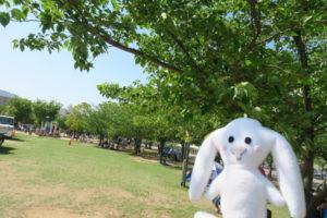 公園と河川敷の間に植えられた青々とした緑の木々の木陰でくつろぐ人々