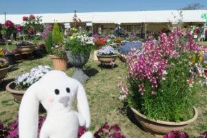 色々な形の鉢に、多様な花々が植えられ展示されている