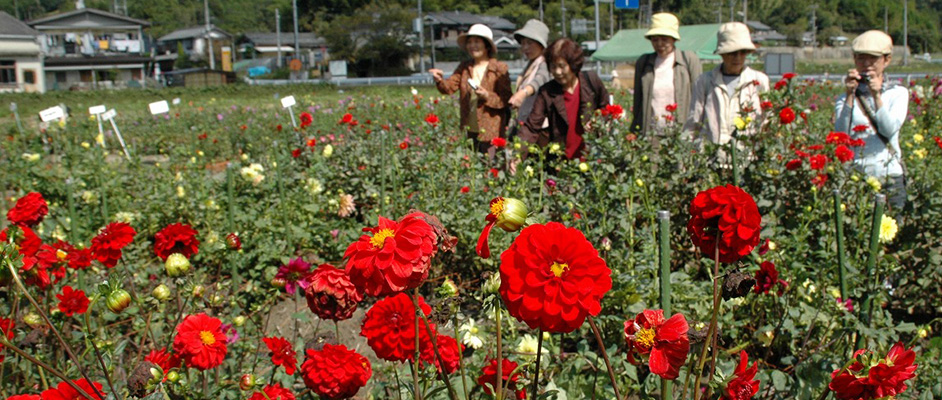 前景に赤いダリアが数十輪咲いているのが見え、ダリア園の中をシニア世代と思われる6人ほどの女性が写真を撮ったり談笑して楽しそうに鑑賞している