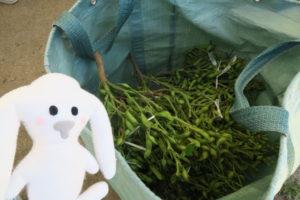 緑色の大きな布袋に枝豆が枝付きのまま入れられている