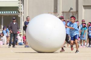 大玉ころがしで白い大きな玉を揃いの赤鉢巻・水色のシャツの子どもたちがころがしている