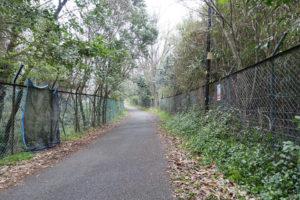 木のトンネルのように、宝塚ゴルフ倶楽部の間を通っている道。
