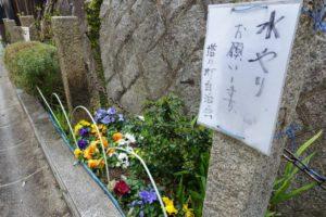 小林聖心女子学院に続く道の花壇。色とりどりの綺麗な花を咲かせている。