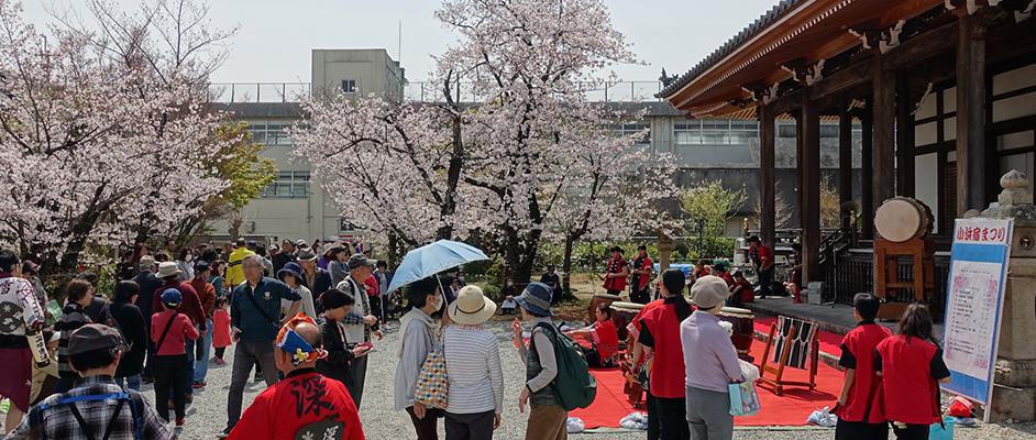 小浜の毫摂寺をメイン会場に行われた「小浜桜まつり」。桜が満開に咲く中、たくさんの人々が会場を訪れている