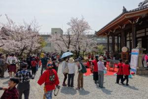 毫摂寺の本堂前に緋毛氈を敷いたステージが設けられていて、その前には、参加者と思われる方や見物に来た人が集まり始めています。その向こうには満開の桜が写っています。