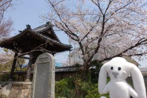 境内の中にまちキョンが立っています。向かって左側後ろに石碑、その後ろには、きれいな桜の木が花をいっぱいつけています。