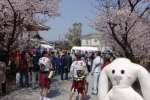 境内には桜がたくさん咲いていて、人もたくさん集まっています。賑わってきました。