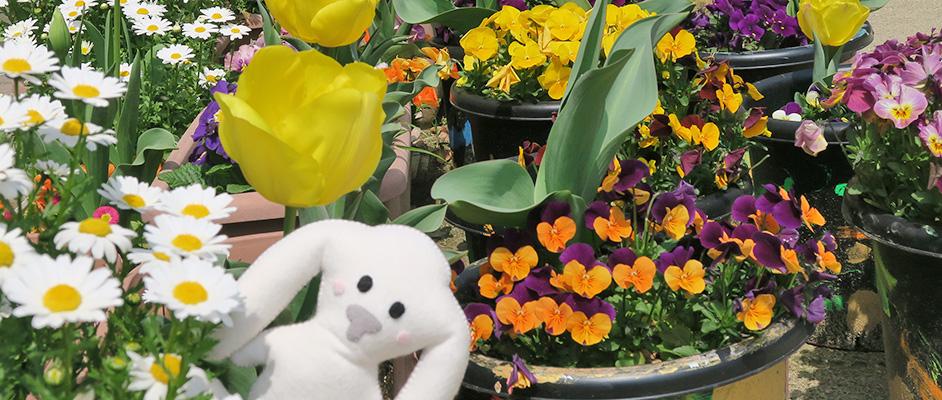 全体に白や黄色、オレンジなどの花がそれぞれ鉢に入っている。中央下あたり、花と鼻の間からまちキョンがこちらを向いて顔を覗かせている