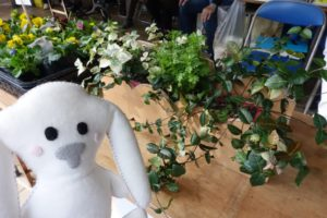 黄色や白の花が販売されている。左下にまちキョンが写っている