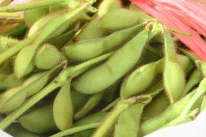 枝豆のアップです。枝豆のさやの中には大きな実がいっぱい詰まっていて、おいしそうです。
