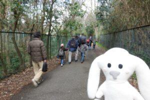 トンネルのように両側から木々に囲まれた道を参加者の皆さんが思い思いに歩いているのを、後ろから写した写真です。一番後ろにまちキョンが写っています。